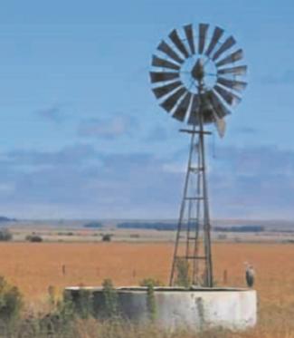 kalfiefees-hermanus.co.za